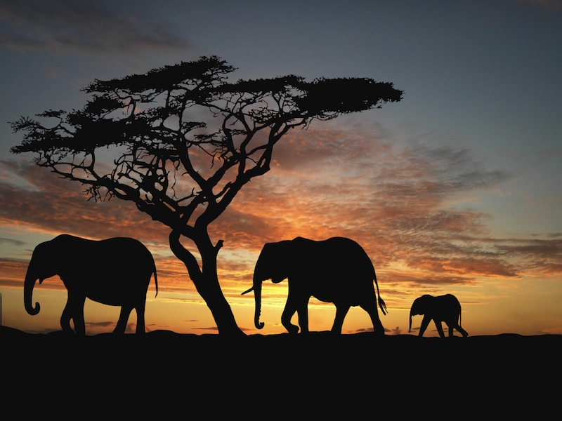 Tanzania paradiso terrestre