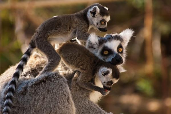 Madagascar, l'isola dei miei sogni