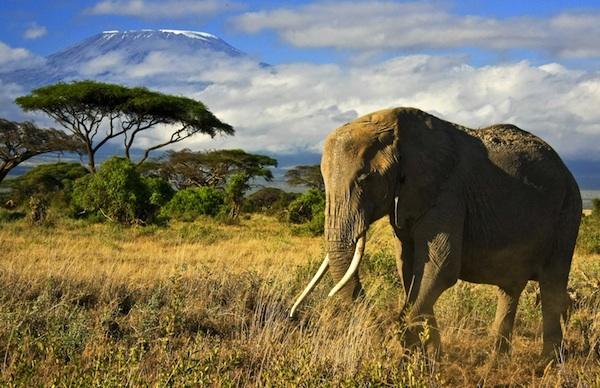 Il mal d'Africa, Kenya tre volte in sei mesi