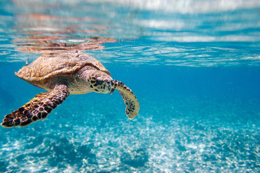 Natura e Parchi marini delle Seychelles