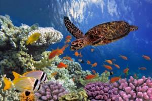 MarsaAlam-Egitto-tartaruga