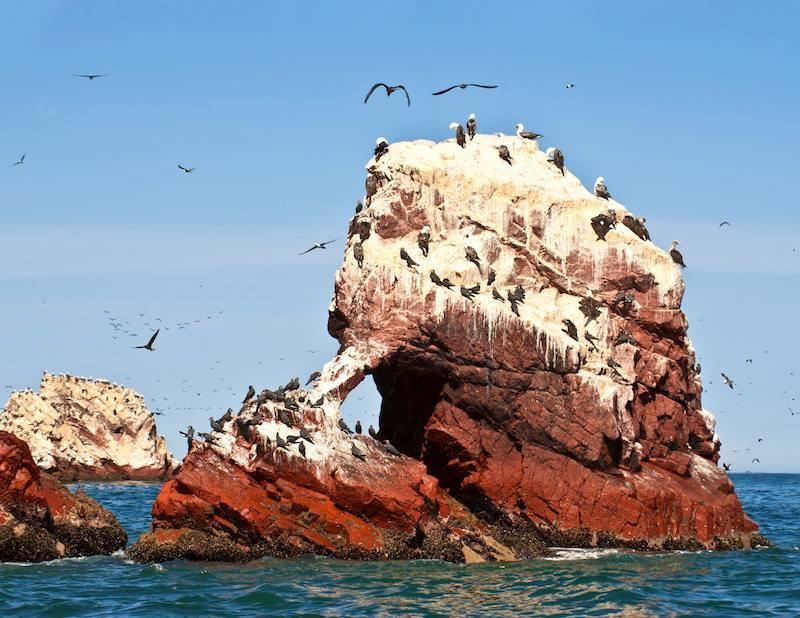 Ballestas Islands Paracas National Reserve Galapagos of Per