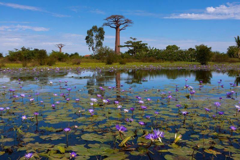 Baubab Madagascar
