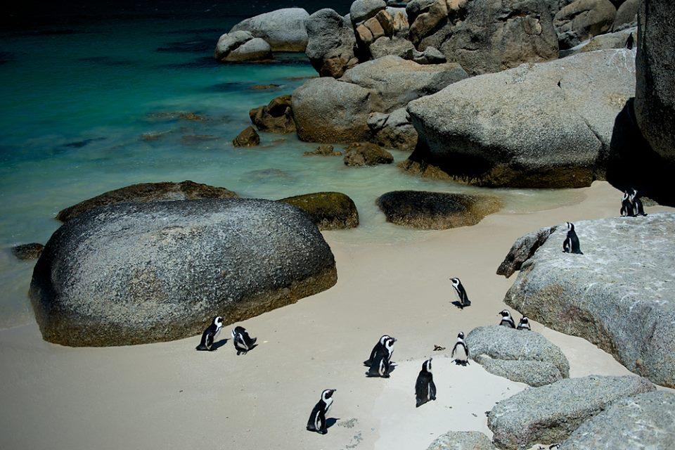 Bolders Beach in South Africa