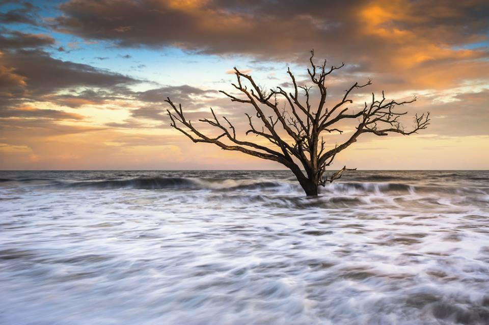 Boneyard Beach Edisto Island South Carolina