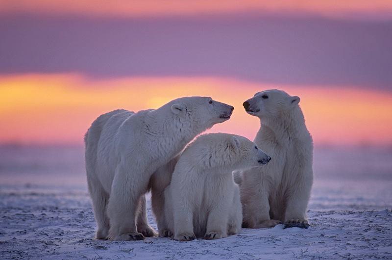 Canadian Artic