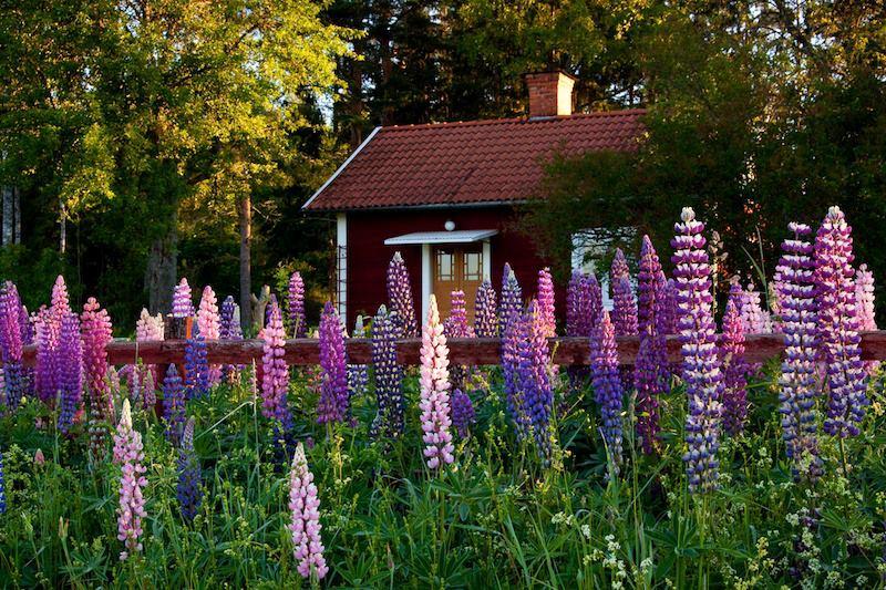 Cottage in Svezia