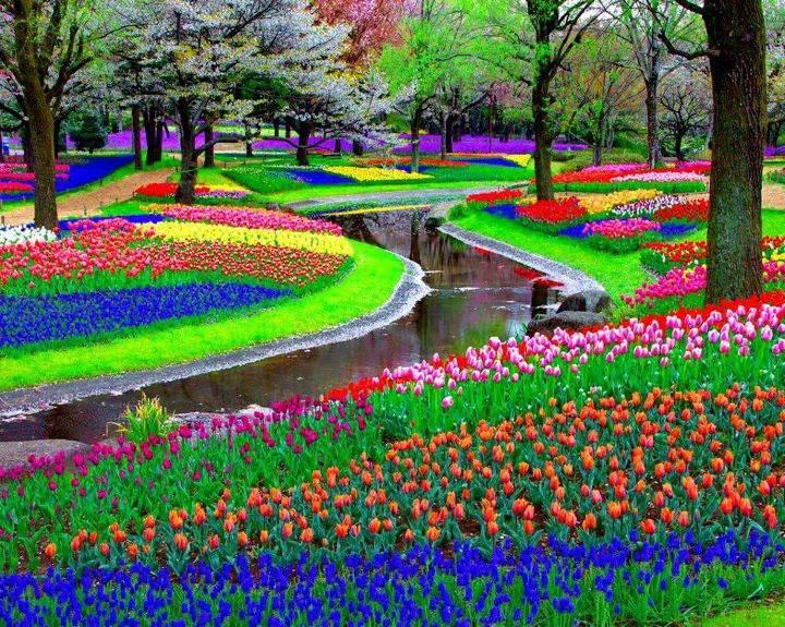 Giardini Keukenhof Lisse Olanda