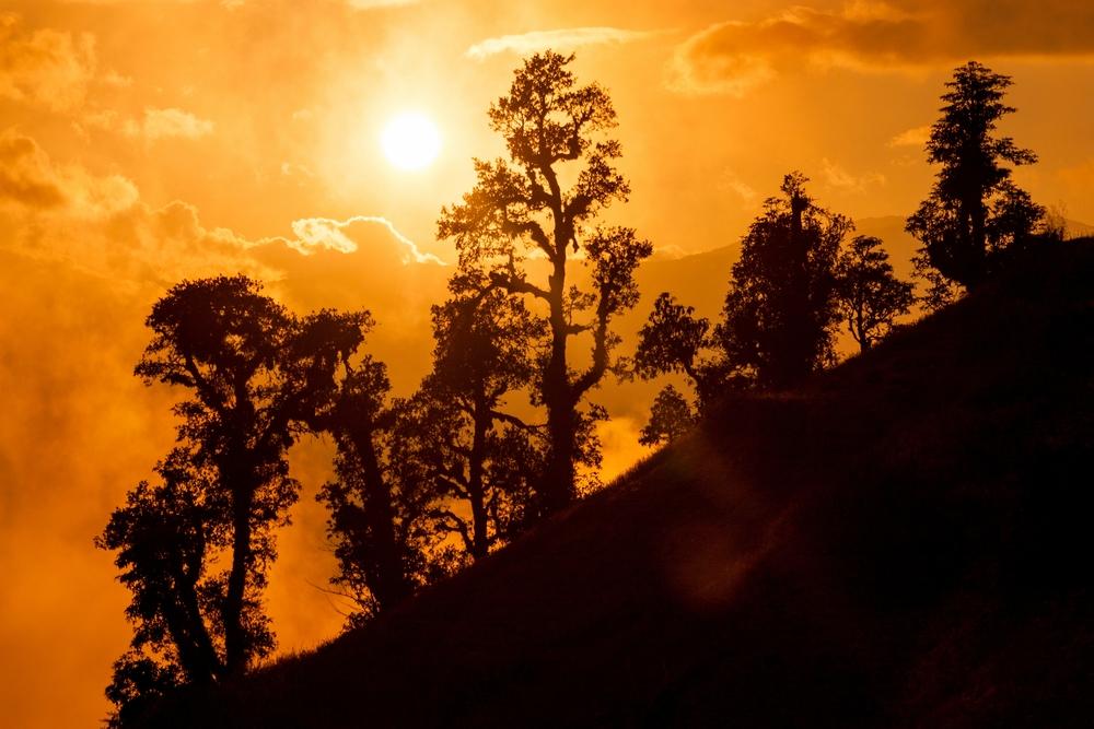 Himalayan jungle Junbesi Solu Khumbu Nepal