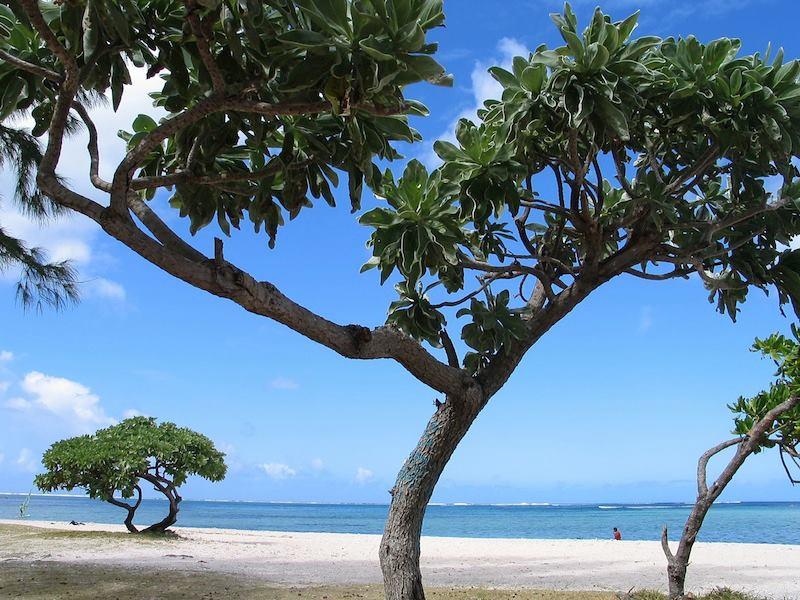 Le Morne Mauritius Island