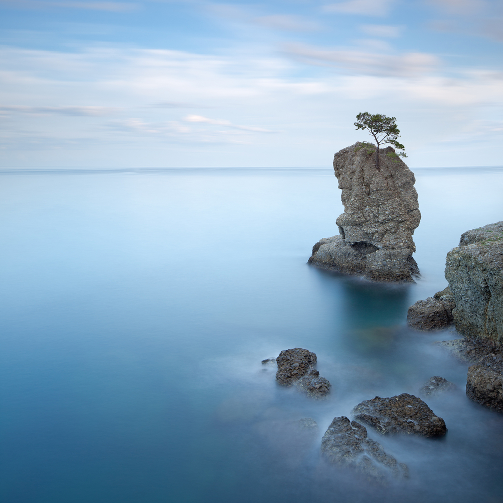 Lonely pine tree rock and coastal cliff beach