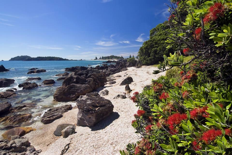 Mount Maunganui Beach New Zealand