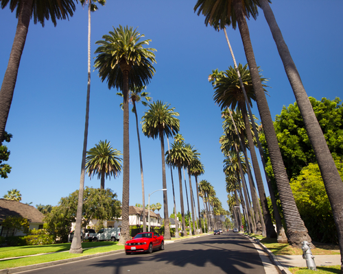 Palm tree lined street in Beverly Hills Ca on Aug