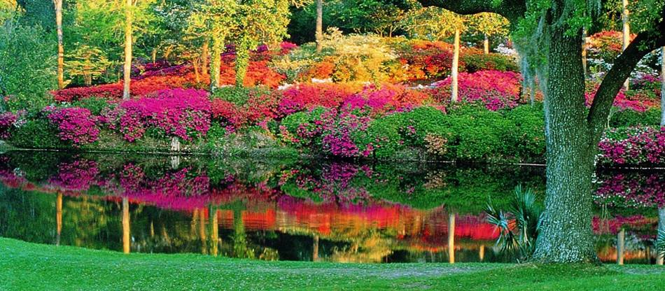 Parco Battery Giardini White Point South Carolina