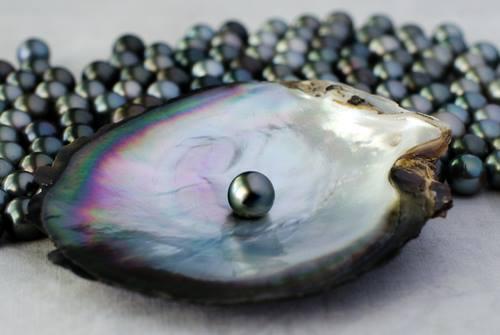 Pearl of the island of Rarotonga