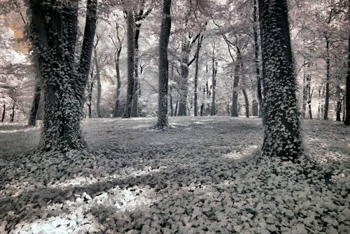 Poznan Park Poland