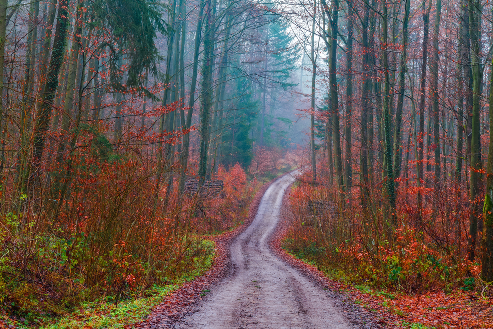 Red leaves on the ground barren trees in Bavaria Germany on a rainy day