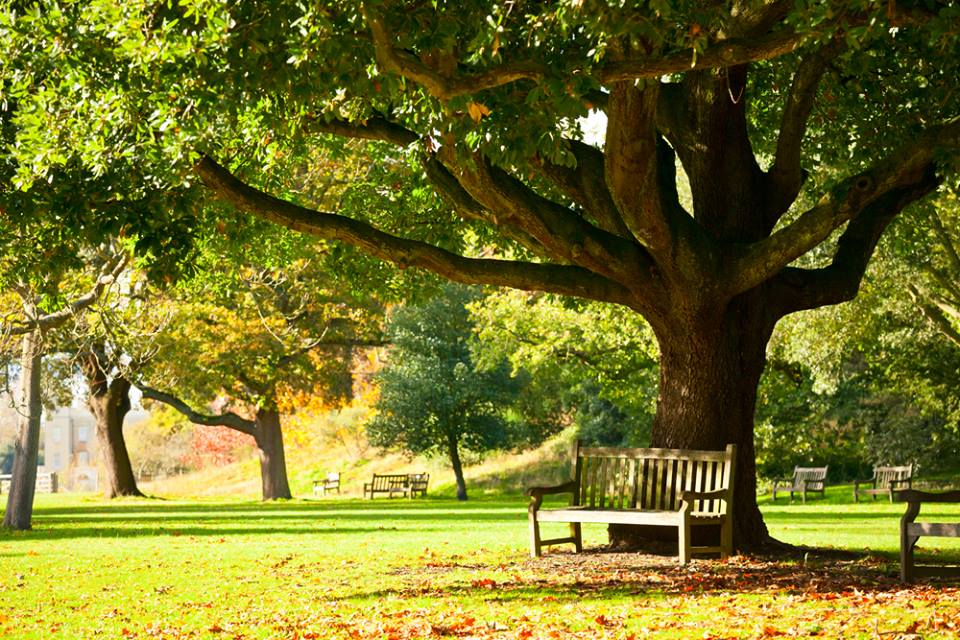 Royal Botanic Gardens London