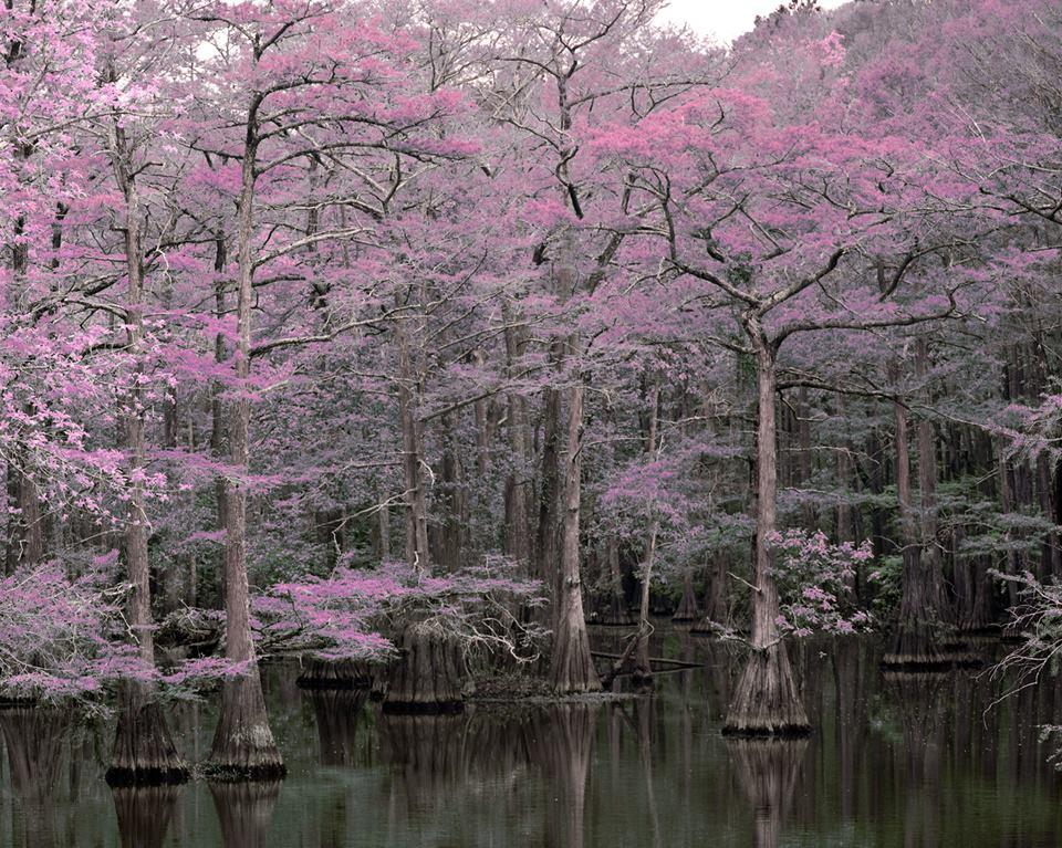 South0 Carolina