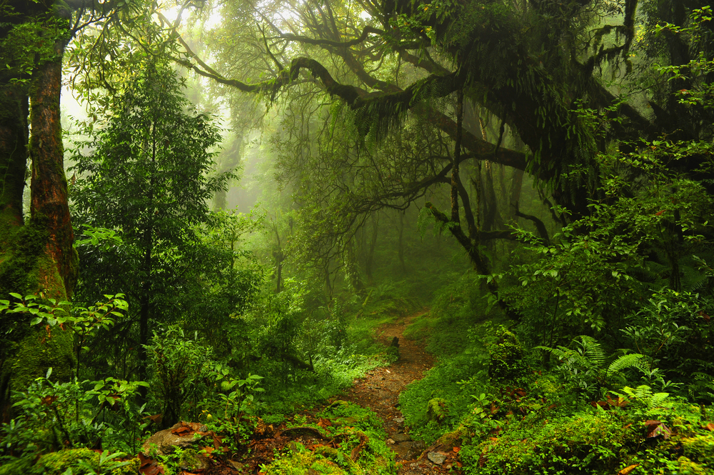 forest in Nepal