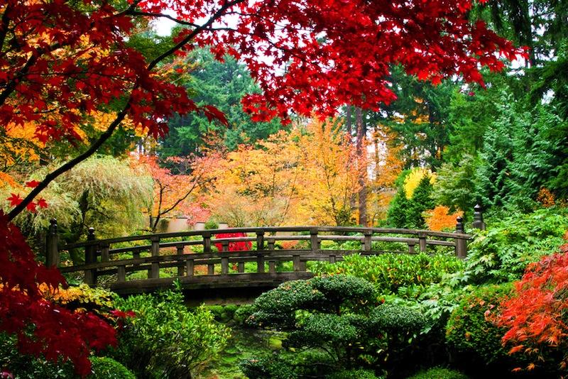 A bridge in a Japanese garden during Fall season