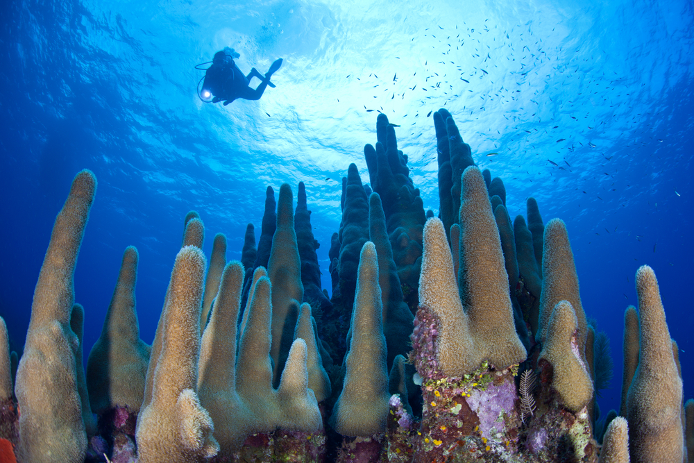 A diver explores a coral reef highlighted by reef building corals off Grand Cayman in the Caribbean Sea