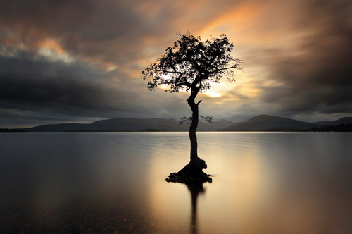 A lone tree partially submerged in the waters of Loch Lomond as the Sun shines through the stormy clouds and lights up the tree and water