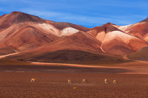 Altiplano plateau in Bolivia 9