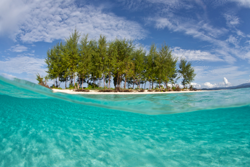 An idyllic island less than a meter above sea level supports a copse of tropical vegetation