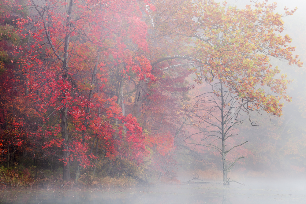 Autumn shoreline of Hall Lake in fog Yankee Springs State Park Michigan USA