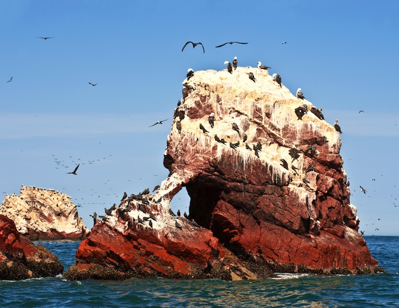 Ballestas Islands Paracas National Reserve