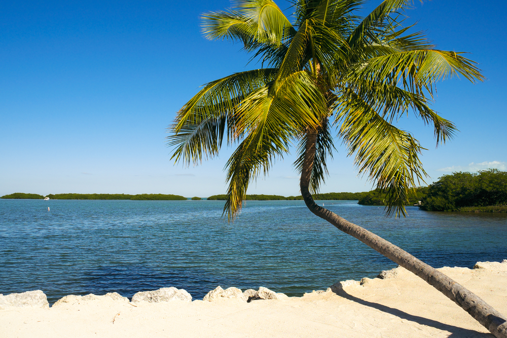 Beautiful Florida Keys along the shoreline with palm tree and bay
