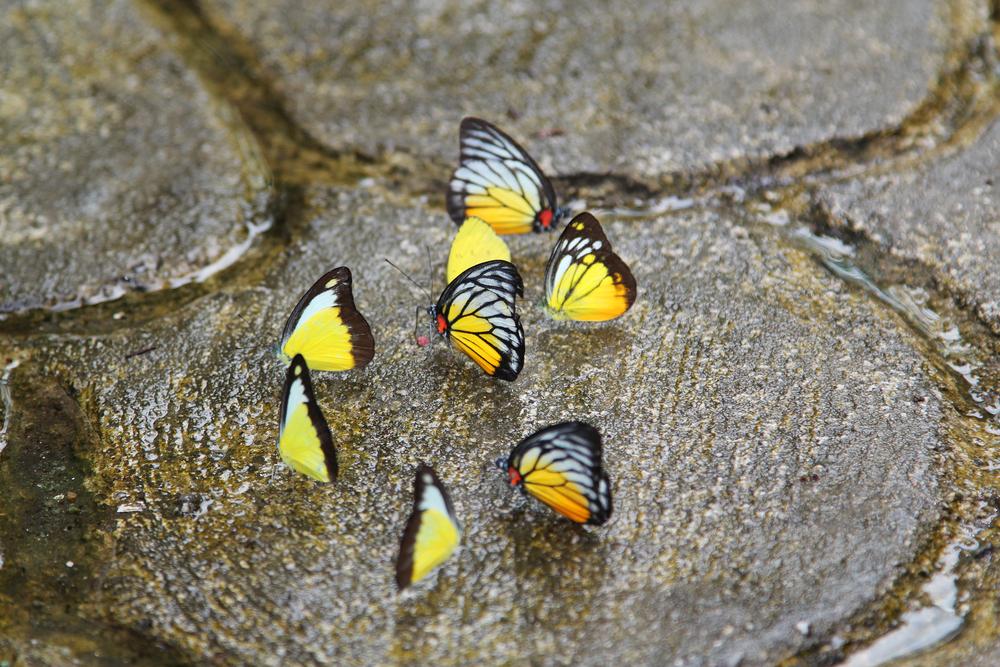 Butterfly Park Kuala Lumpur Malaysia