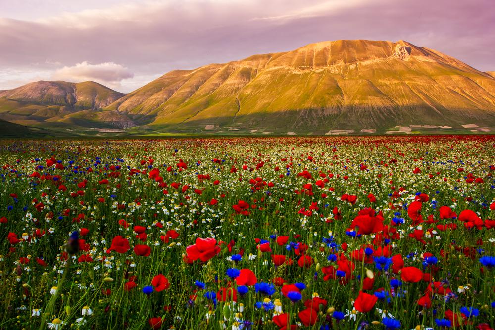Castelluccio flowering hills landscape Italy