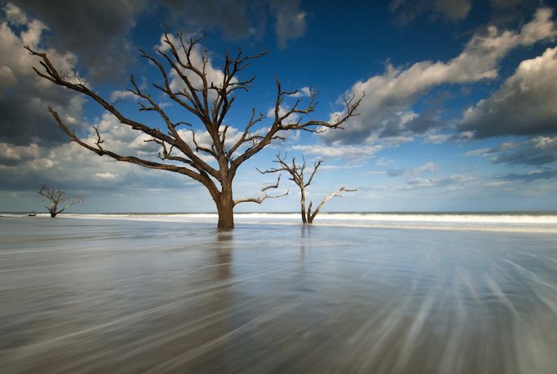 Charleston South Carolina Beach Tree in Surf at Botany Bay Boneyard Beach Edisto Island jpg
