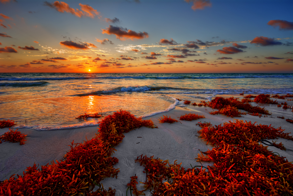 Colorful early sunrise over beautiful sea shore with a bright seaweed foreground virgin island