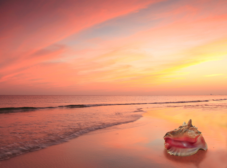 Conch Shell on the Beach at Sunset