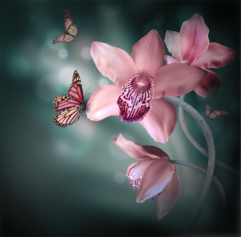 Copia di orchidea