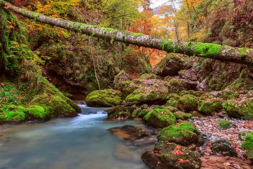 Creek deep in mountain forest in Transylvania