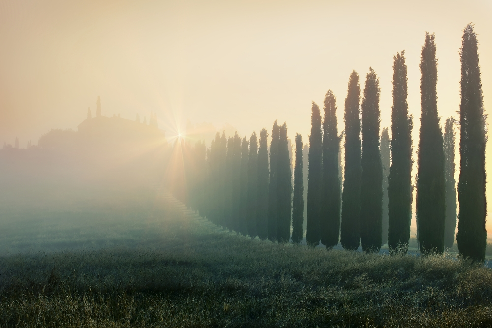 Cypress alley in Tuscany Italy