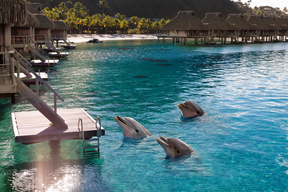 Dolphins in a bay of the tropical island