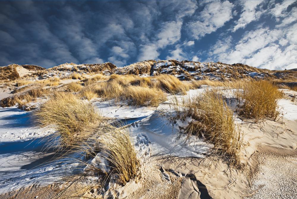 Dunes at the Danish North Sea coast at the beach of Blaavand