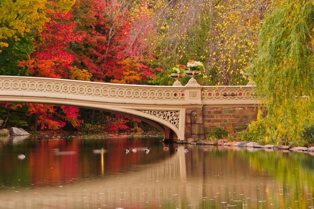 Fall colors at Bow Bridge in Central Park