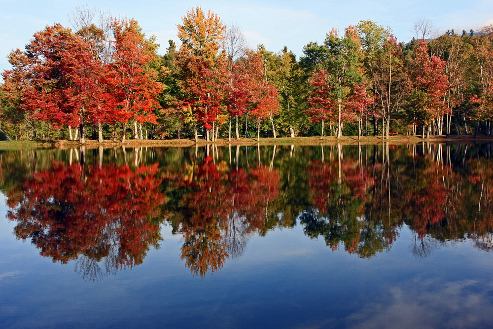 Fall foliage along small pond in Gorham New Hampshire