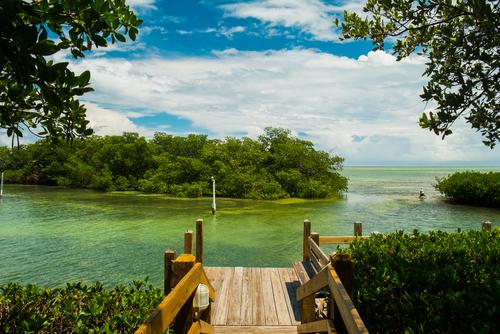 Florida Keys with mangroves
