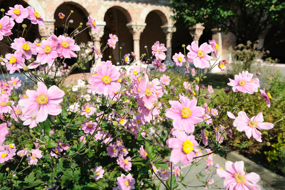 Flowers in the Cloisters garden in New York City