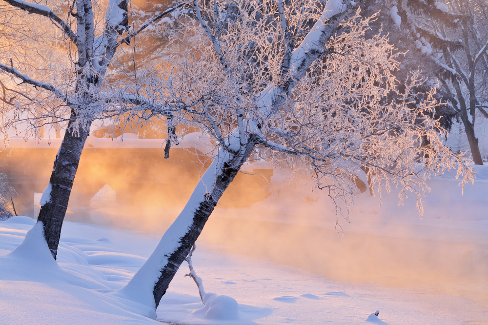 Foggy winter landscape with frosted trees at sunrise Portage Creek Milham Park Michigan USA