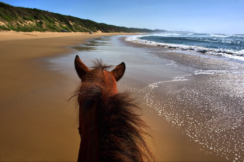 Horseriding on beach landscape view from horse