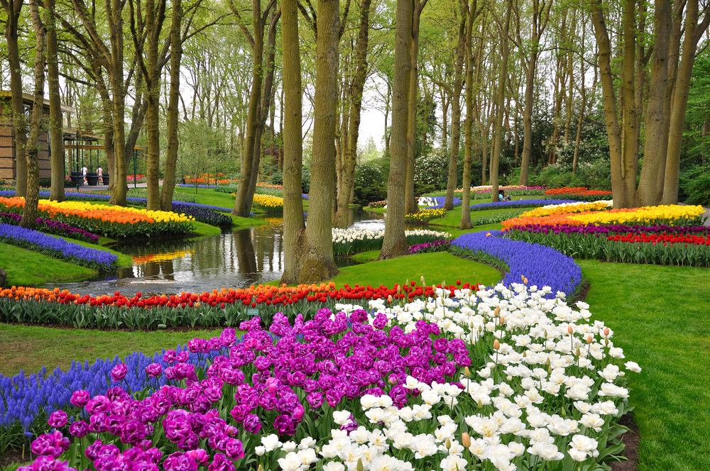 Keukenhof park in Holland olanda73