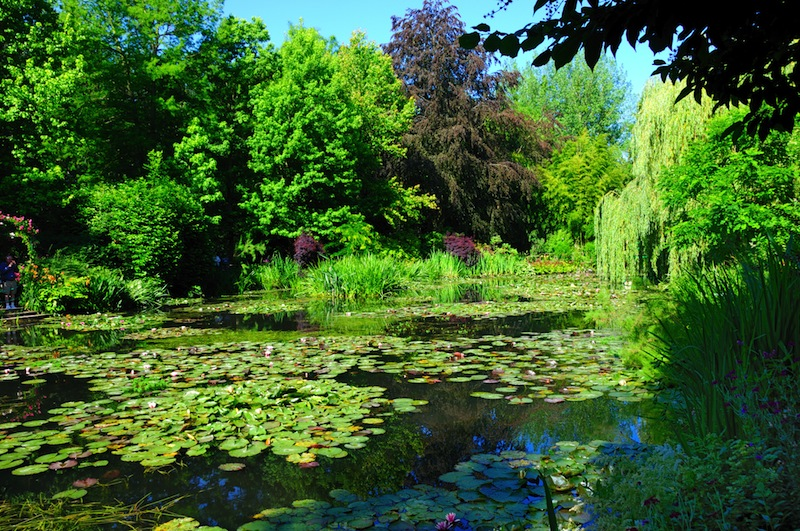 Lily pond in Monets garden just outside Paris